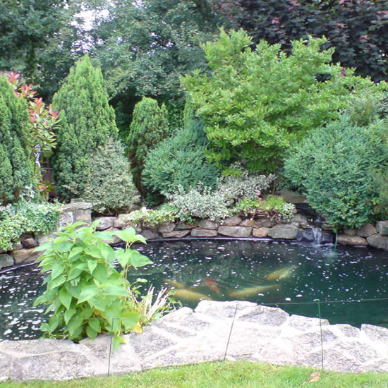 Pond & Water Feature
